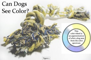 can-dogs-see-color
