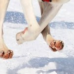 dog feet across snow